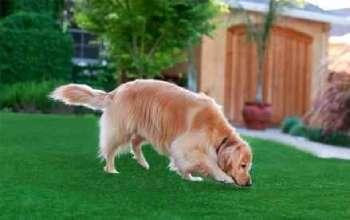 بهترین چمن مصنوعی برای سگ